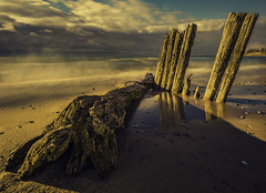 Deadlines can wait (Todd Murrison (Whitby61)) Tags: toddmurrison 3shotpanorama canon canon6d canon24mmtsef35l x4filter logs pilings beach january 2017 winter lakeontario 8seconds canada ontario goldenhour morning sandy deadlinessuck mothernature gettingawayfromthedesk login longexposure reflections clouds driftwood shoreline mist