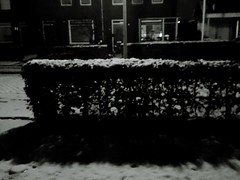 Experiments in b&w - Snow on a hedge in the early morning - No People Outdoors Day Snow Light And Dark (markjowen66) Tags: nopeople outdoors day snow lightanddark