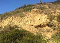 (ArgyleMJH) Tags: backbay california capistranoformation coronadelmar geology miocene mudstone newportbeach orangecounty photostream pliocene sandstone sedimentary siltstone uplift uppernewportbay