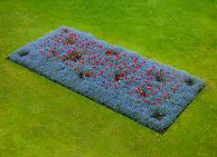 Red Poppies on a Blue Background (Steve Taylor (Photography)) Tags: red blue green poppy lawn grass park newzealand nz southisland canterbury christchurch city hagleypark rectangle oblong spring flower bed