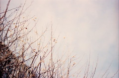 twigs (november bed) Tags: portra lomography analog photography nature sky twigs film olympus om1 pastel filmisnotdead