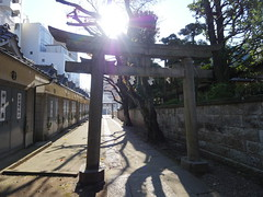 Light (CentipedeCarpet) Tags: panasonic gx8 micro four thirds tokyo shrine 神社 日本 東京 光 shine light sun sunlight shadows japan jinja unlimited photos
