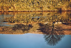 Reflection Perfection (Missy Jussy) Tags: reflections drystonewalls water reservoir ice frozen frost sunlight sheep tree sky farmland piethornevalley rochdale landscape lancashire land england northwest canon canon70200mm canon5dmarkll