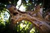 wood art.. (paul.wienerroither) Tags: wood art light bokeh dof depthoffield photography canon 50mm 5dmk3 lights contrast colors nature shaped spain travel