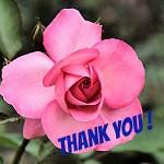 Rose Roza (koty3) Tags: rosen roze rosliny