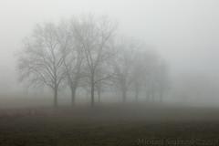 Into Pale Shadows and Ghostly Dreams (Shadows in Reflection) Tags: foggymorning trees dreamy goodtimeswithbb ghostly washtenawcounty michigan grandmasfarm phantasm