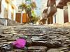 A Bougainville leaf on the cobblestone streets of Kaş (VillaRhapsody) Tags: alley street kaş turkey cobblestone town bougainville bougainvillea
