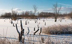 A glorious morning (Kees Waterlander) Tags: sneeuw winter nederland emmen drenthe thenetherlands bargerveen