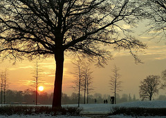 cool (zphanjakidze2) Tags: amazing atmosphere beautiful bremen class clouds colors cool coolpicture coolpictures deutschland flickr germany horizon kalt landscape light sky snow solitarytrees sonnenuntergang sunset tree trees winter winterday winterscene