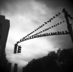 roost (davebias) Tags: blackandwhite film holga toycamera squareformat