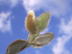 sky and magnolia