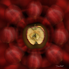 cirle of life (David Brian) Tags: red color art apple fruit dark colorful different artistic unique great dry seeds spinning apples dieing aging reddish wrinkled hiddenmeaning ratating