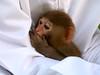Ammmm!!! u said the F word!!! (-ViDa-) Tags: cute topf25 monkey interestingness1 speaknoevil furrball samboosa exploretop20