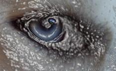 Meep Eye Art