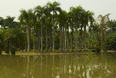 Palm (.pony.) Tags: kunming xishuangbanna