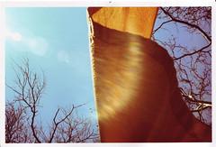 gates1 (thearnoswimmer) Tags: 2005 nyc newyork film crossprocessed centralpark saffron christo thegates gatesmemory