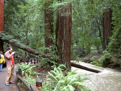 More Muir (erinob) Tags: trees forest river ian muirwoods nuir