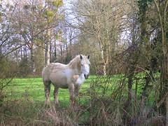 Spring friend (zenera) Tags: portrait horse white green field grass landscape countryside spring nikon farm zenfli country driveby april inpassing brambles