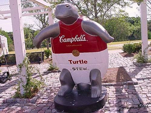 Cambell's Turtle