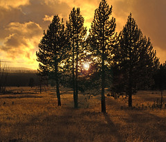 Sunset At Canyon (Bonnie Bowne) Tags: yellowstone wyoming sunset naturelover landscape autumn