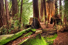 Pfeiffer Redwoods (ojaipatrick) Tags: california light nature digital photoshop canon landscape 350d rebel xt moss scene redwoods hdr pfeiffer photomatix