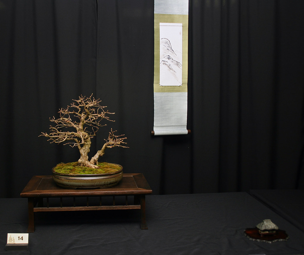 Korean Hornbeam display.