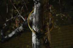 un arbre (julie_b.) Tags: tree cadenas lock montreal arbre