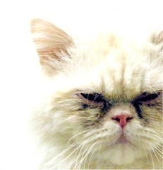 3086 Persian or Persian Mix Cat at Heartland Humane Society (Pixel Packing Mama) Tags: beautiful tag3 taggedout interesting fantastic great mycats greatshot top20catpix catsandkittensset catscatscats ilovemycat nuggets cutecat allanimals artnolimits persiancat exclamationpoints catskittensset catlovers heartlandhumanesociety femalephotographers petparade flickrcat notmycat beautifulcats familyfurrythingsorboth pixelpackingmama meowscollector catssmalltobig taggedoutthegraduatesofletsplaytag dorothydelinaporter canonpowershota510a520 worldsfavorite everybodywantstobeacat notmypet taggedoutproudofitset beautifuluniverse melfanclub welovelatte tobysgroupies montanathecat~fanclub catcentury crabbycats cc4000 v4000 montanathecat~fanclubpool favoritedpixset mostinterestingaccordingtoflickralgorithmset cat4000 mystoryoldones ceruleanthecat~fanclubpool exclamationpointspool pixwithexclamationpointsincommentsset views1000andupdomesticcatsonlypool allcatsallowedpool uploadedfirsthalfof2006set exclamationpointsincommentsset update4sure painterlycatsset catsaremyfriendsfriendofthemonthvoteseptemberpool update4sureset pixelpackingmama~prayforkyronhorman oversixmillionaggregateviews over430000photostreamviews