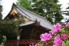 Flower and Shrine @ Nezu Jinja (( I was ) Lost in Tokyo) Tags: flowers festival japan fleurs tokyo shrine bokeh hana azalea matsuri bunkyo japon jinja bunkyoku tsutsuji nezu 111v1f bokehsonicejuly bokehsonicejuly20
