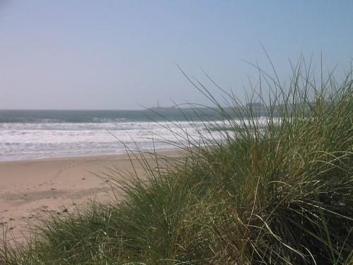 Grassy Beaches