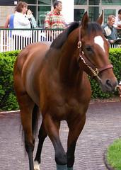 Brother Derek (horsestohorsepower) Tags: horseracing oaks derby churchilldowns thoroughbred paddock schooling kyderby dawnatthedowns kyoaks morningworks