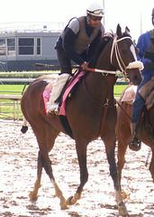 Miss Norman (horsestohorsepower) Tags: horseracing oaks derby churchilldowns kyderby dawnatthedowns kyoaks morningworks