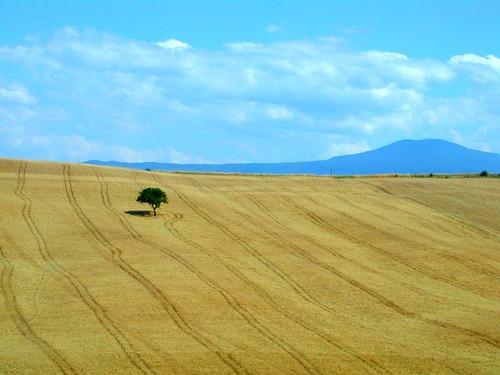 Tuscany III