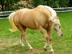 May 7, 2006 (Trish Overton) Tags: horse explore frisky palomino