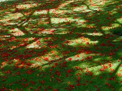 carpet of flowers 1 (.Leili) Tags: flowers shadow red summer sun color reflection green colors grass catchycolors geotagged ilovenature carpet israel petals worship warm peace shadows spirit prayer middleeast east holy heat spirituality bahai haifa spiritual strewn grounds flametree middleeastern contemplation bah persiancarpet sundappled holyplace bahaigardens prayerful carpetofflowers shrineofthebb leilitowfigh placeofprayer bahgardens 1999sonydscp1
