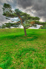 Tree (themikepark) Tags: tree nature landscape hdr hines formom 3xp photomatix