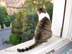 Cat with a view * (*DaniGanz*) Tags: white silly cute window cat crazy kitten tabby kitty finestra windowsill gatto bianco micio davanzale fusillo catsandwindows tigrato thebiggestgroup daniganz