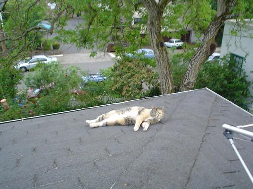 Zelda on roof