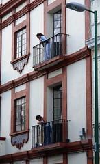 Chismosas (Jesus Guzman-Moya) Tags: people mxico mexico gente balcony r1 puebla balcn dscr1 sonydscr1 chuchogm jessguzmnmoya