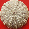 erizo1 (-Merce-) Tags: squaredcircle seaurchin erizomar mmbmrs