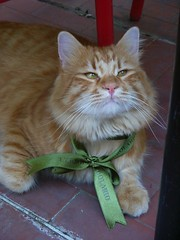 Green ribbon (Jiobbe) Tags: cats cat ccc30