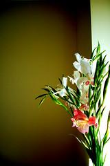 bunch (muftysludge) Tags: flowers bunch freesias bunchofflowers