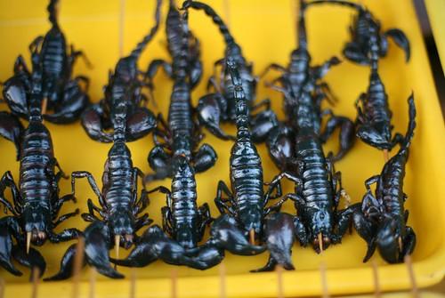 bbq scorpion