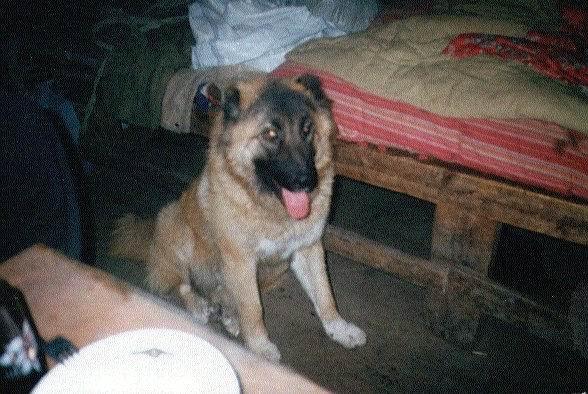 013mein-hund-kallta