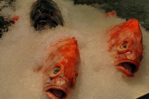 Screaming Fish