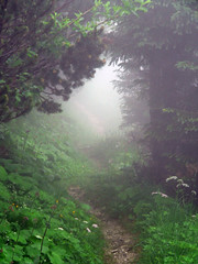 Pfad in den Nebel - by oefe [now at ipernity]