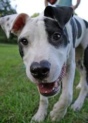 Max (Gunni Cool) Tags: park dog brooklyn prospect slope
