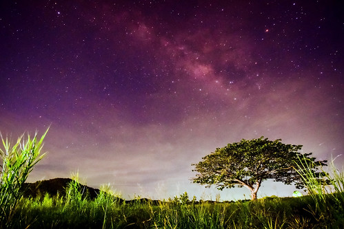 Big tree under milky way