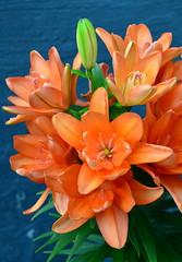 A Bevy of Orange Beauties (pjpink) Tags: flowers orange spring tn tennessee may powell lillies 2015 pjpink