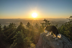 Spencer's Butte Sunset (Justin Knott) Tags: dog butte spencers
